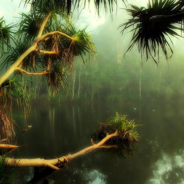 yagmur ormanı