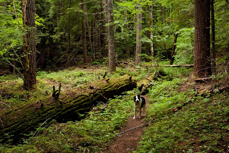 Linda's Lens: Unexpected Soggy Hike