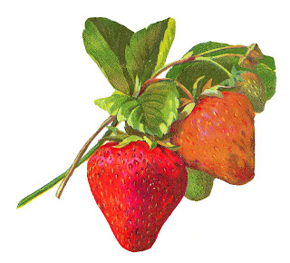 berry fruit strawberry image download