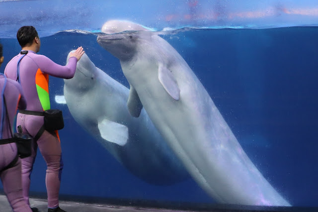 珠海長隆海洋王國 白鯨劇場