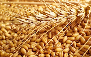 buğdayın yararları