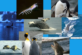 Antarctic Animals