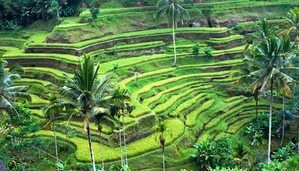 Wisata Terpopuler Di Indonesia Tempat Wisata Di Bali Yang