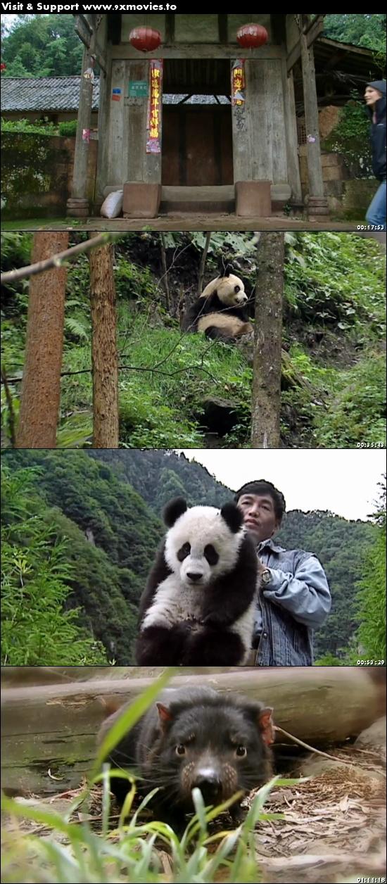 Sneezing Baby Panda The Movie 2015 Hindi Dubbed 720p WEB-DL 850mb
