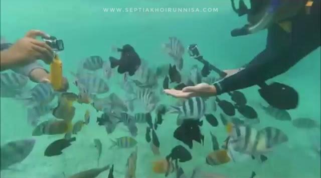 di dekat sebuah dermaga terdapat ikan-ikan cantik yang ramah selfie