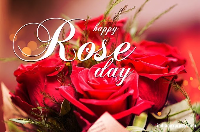 Rose Day 2020 Status Images Love Shayari SMS in Hindi