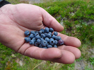 Acadia-National-Park-Cadillac-Mountain-Carriage-Trails-blueberries