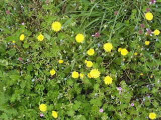 Πρασινάδα με κιτρινα λουλουδάκια σαν μαργαρίτες και μερικά πιο μικρά σε χρώμα ροζ