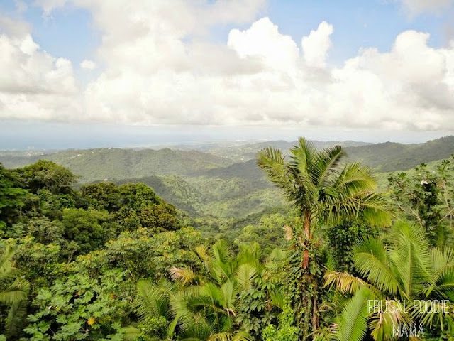 The El Yunque National Forest- the only tropical rain forest in the U.S. National Forest System