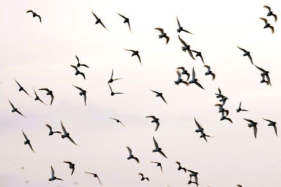 Azure Scratchings: Poem by Anne Sexton  Flock