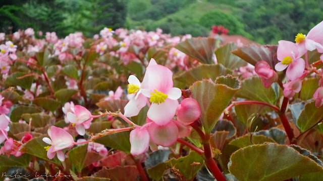 Terrazas de Flores Cebu Botanical Garden