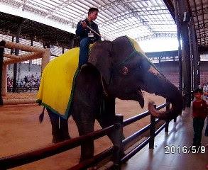 NONTON show gajah di Nongnooch Pattaya