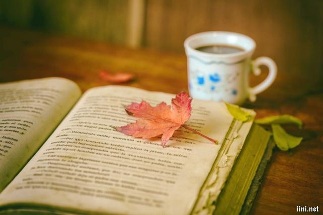 ảnh chiếc lá mùa thu trên trang sách