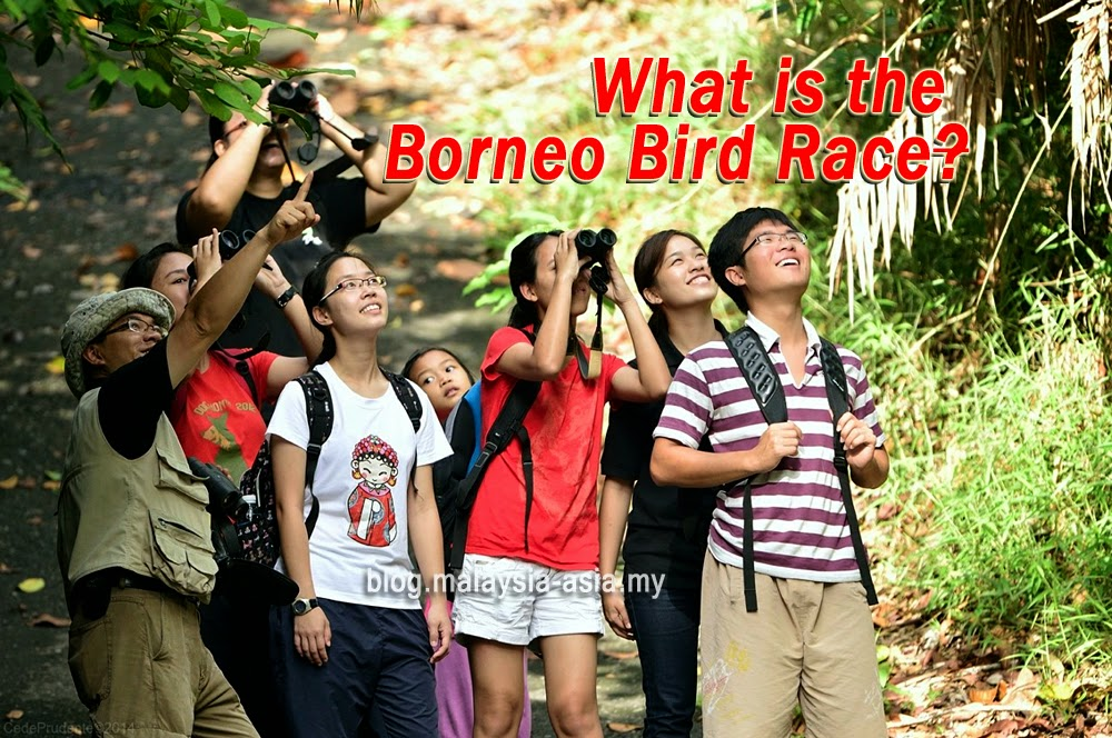 Borneo Bird Race 2014