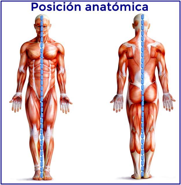 Posición anatómica ilustrada en imagen