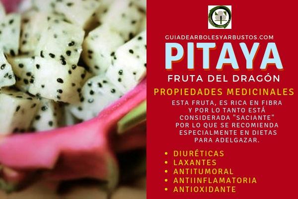 La pitaya o fruta dragón tiene propiedades diuréticas, laxantes, antioxidantes, entre muchas otras
