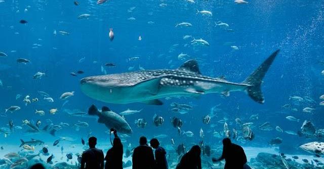 The Largest Aquarium In The World Georgia Aquarium