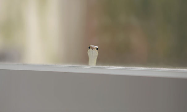 40 Heartwarming Pictures Of Animals - Found This Little Guy Peeking Through My Window