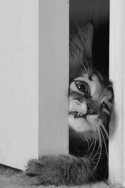 Photographie de chat en noir et blanc sur Pinterest