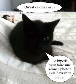 Chatte noire et chatte isabelle.