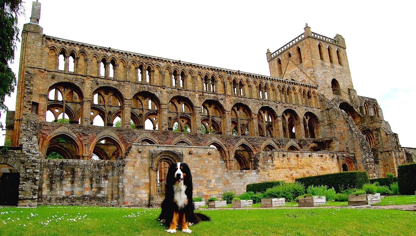 Mattie at Jedburgh Abbey