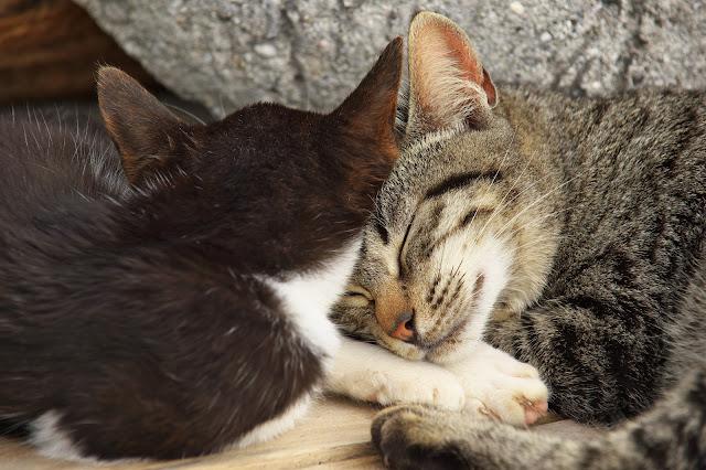 腕枕する猫の写真