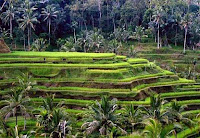 Ceking Rice Terrace Tegallalang