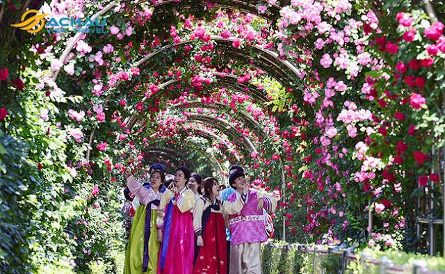 Du lịch Hàn Quốc tháng 5 để trải nghiệm lễ hội hoa hồng đầy thú vị6