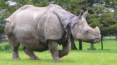 New Delhi Declaration on Asian Rhinos