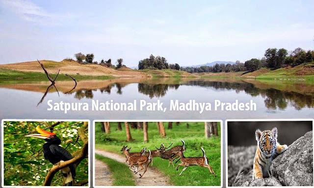 Satpura tiger reserve safari