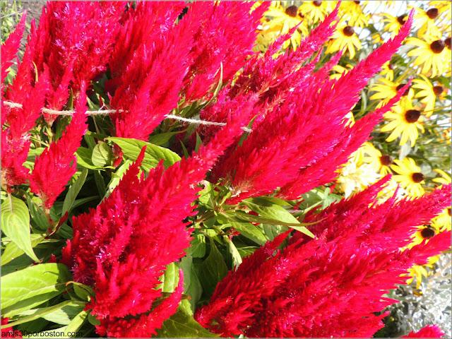 Granjas de Massachusetts: Flores en la Cider Hill Farm