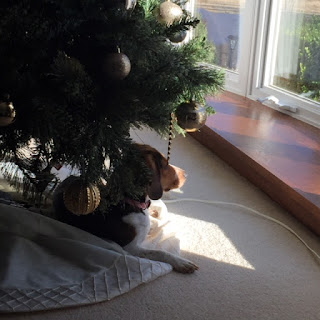 A Christmas Tree skirt under the tree, sans gifts, plus beagle