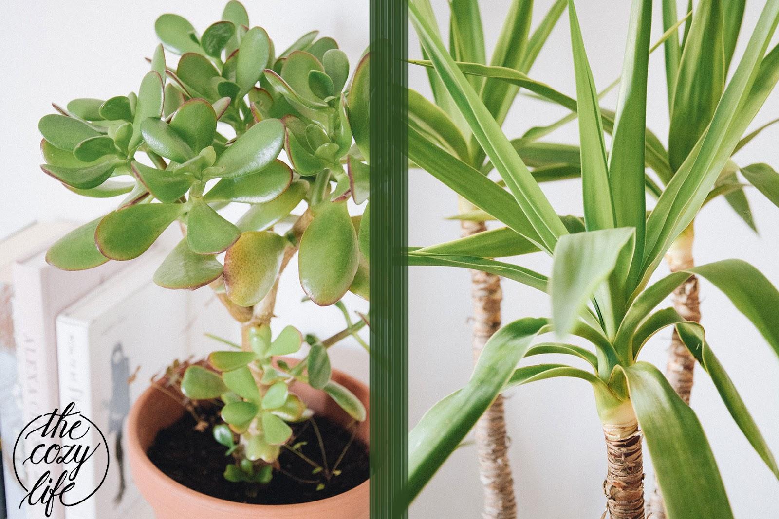 Die Zimmerpflanze Alleskonner Oder Staubfanger