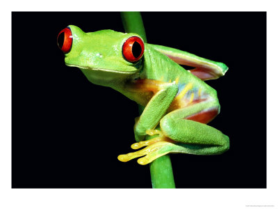 How Long Can A Tree Frog Live Without Food