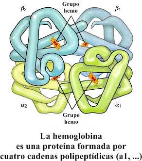 Sistema respiratorio - intercambio de gases