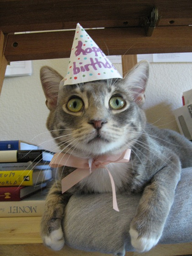 Its OK To Have An Opinion Cats In Birthday Hats