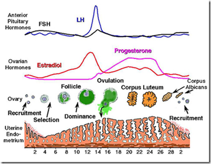 mekanisme kerja hormon steroid dan protein