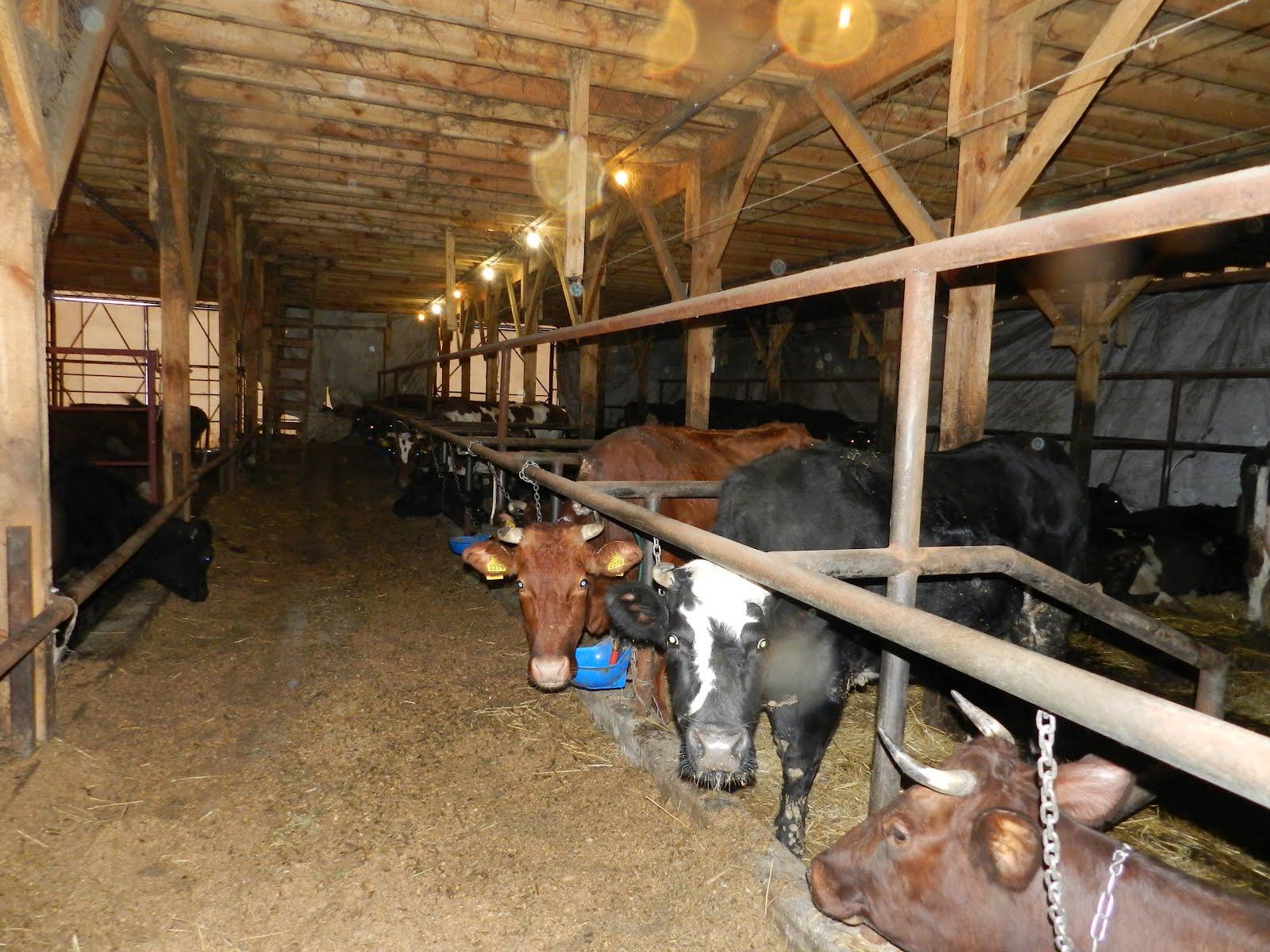Moo-oosings by the Verhoog family: Inside the barn
