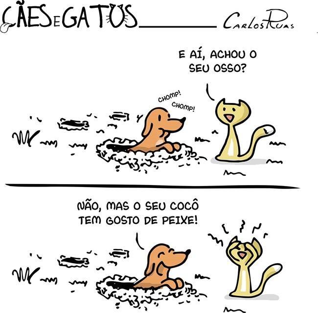 Tutti Gatti Cat Sitter em Curitiba/PR: Momento Diversão - Cães e ...