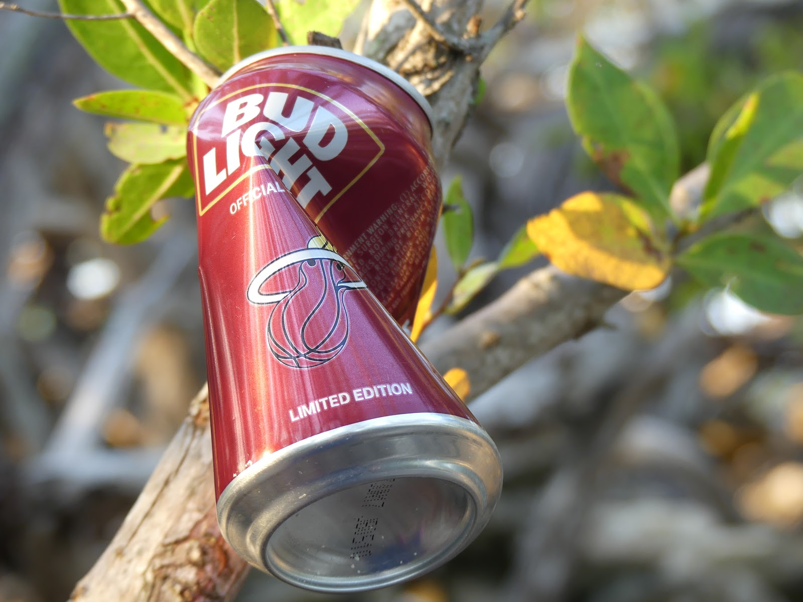 Key west diary boca chica birds for Craft beer key west