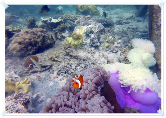 hidden paradise Pulau Pahawang