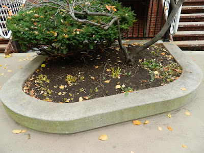 Toronto Garden District Fall Cleanup After by Paul Jung Gardening Services--a Toronto Organic Gardening Company