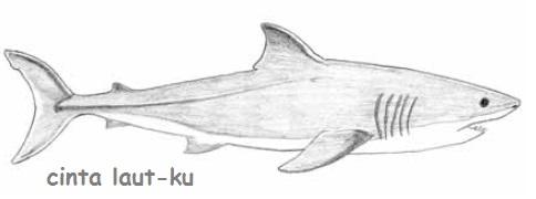 Download 480 Contoh Gambar Ikan Hiu Terbaru - Gambar Ikan