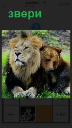 лежат вместе звери, медведь и лев рядом