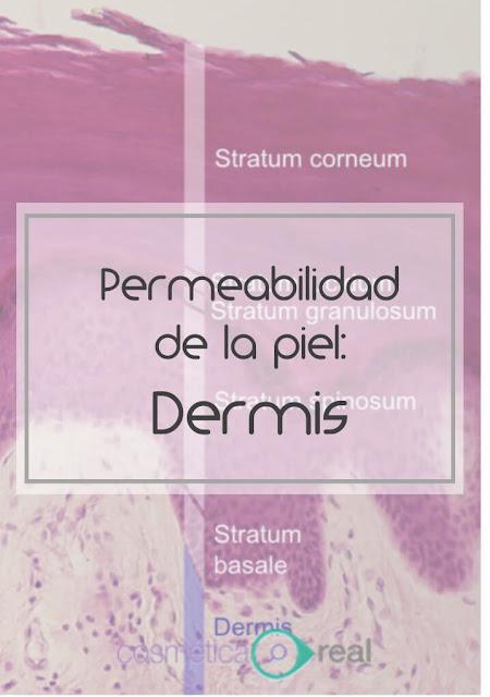 Barrera de la piel: Dermis, implicaciones cosméticas