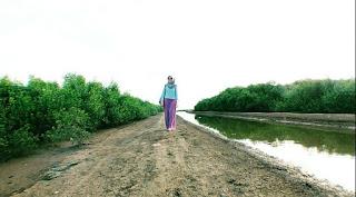 Hutan Mangrove Pantai Sambilawang Pati