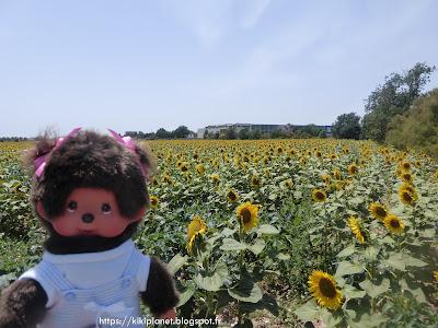 Diana la Monchhichi pose devant un champs de tournesols en Espagne