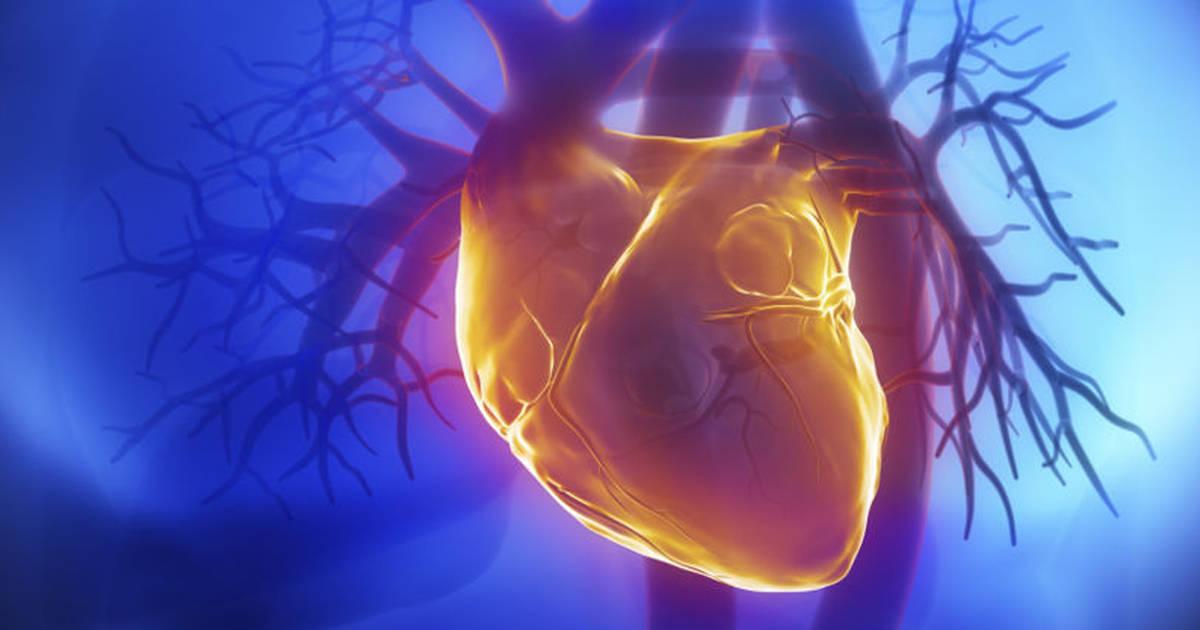 Decrease Your Danger of Heart Illnesses.