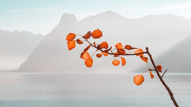Rusty Leaves on Twig. Autumn Colors HD