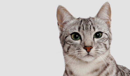 The Most Stunning Cats You Should Know About